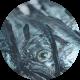 hoki_fish_circle
